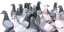 منظمة الصحة العالمية : أنفلونزا الطيور لا تزال تمثل تهديدا للبشر