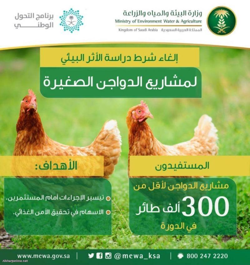 """""""البيئة"""": إجراءات ميسرة لمشاريع الدواجن تحت 300 ألف طائر"""