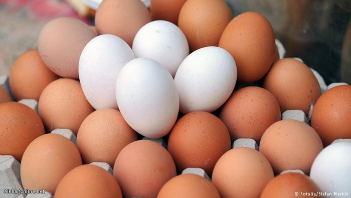 دراسة تحذر: كثرة البيض يؤدي إلى الموت