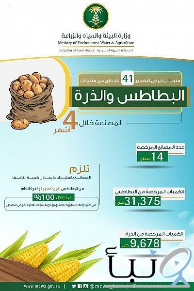 """#""""البيئة"""" ترخص لـ 14 مصنعاً لتصدير البطاطس والذرة المصنعة خلال 4 أشهر"""