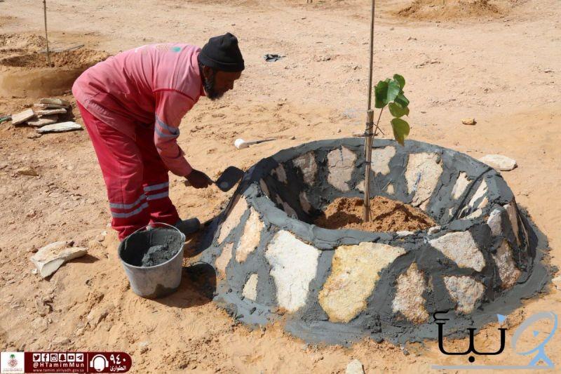 بلدية #حوطة_بني_تميم تواصل عمل الأحواض الأجمالية للأشجار