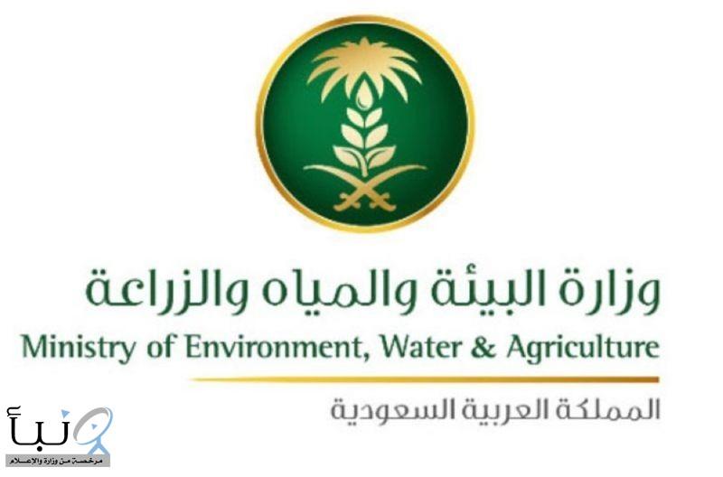"""""""البيئة"""" تفسح 238 ألف رأس ماشية لتغطية موسم الحج والسوق المحلية"""