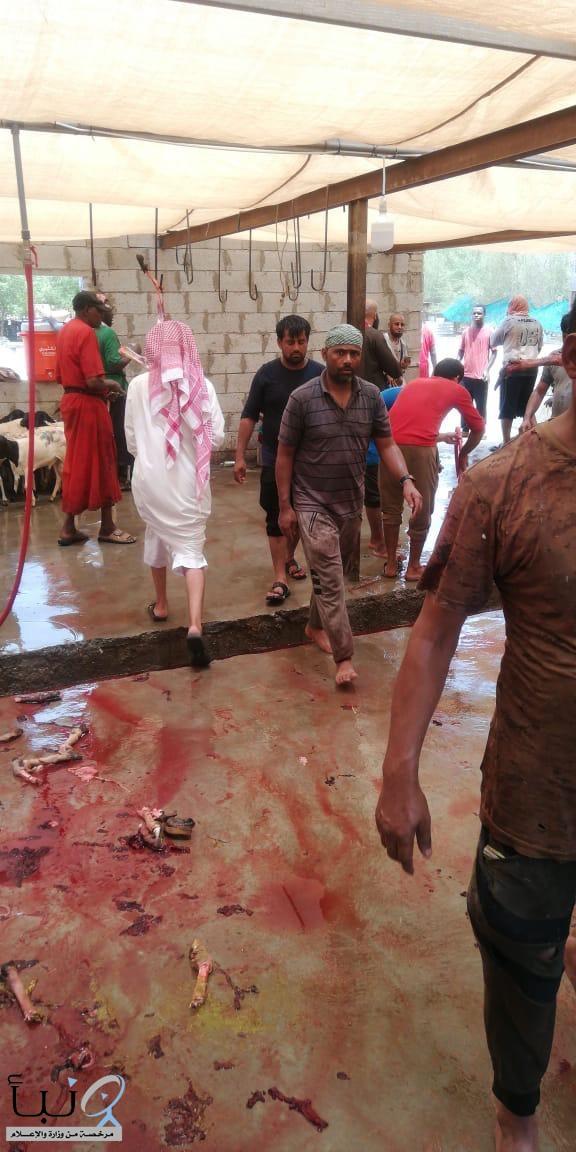 بلدية العمرة الفرعية تضبط مسلخ عشوائي بالشميسي