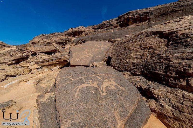 منطقة نجران تتجه لأن تكون أكبر متحف مفتوح للنقوش الصخرية عالمياً