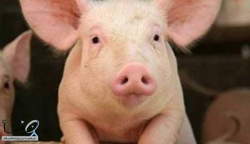 #حول_العالم الصين تحسم الجدل حول فيروس انفلونزا الخنازير الجديد