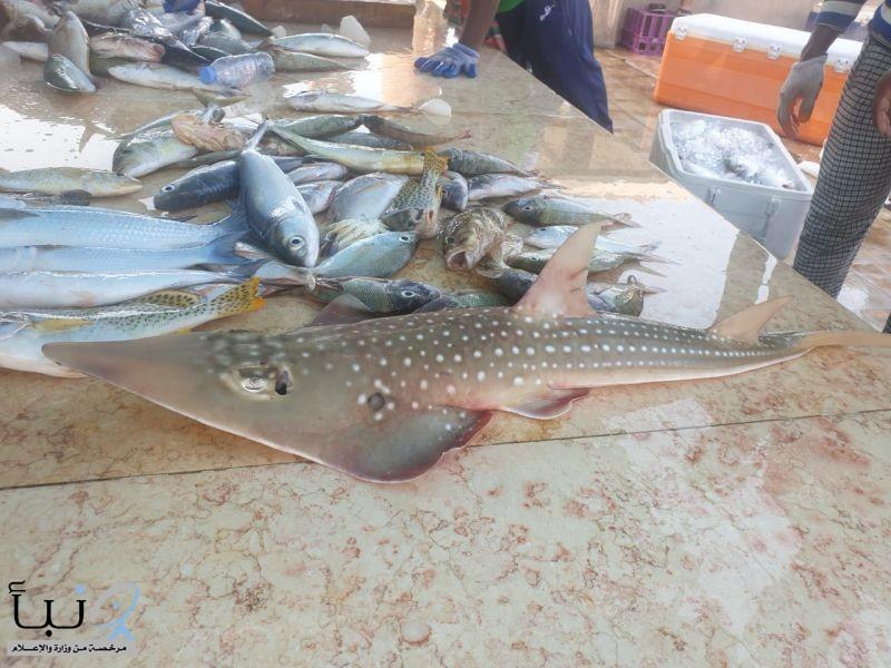 الحياة الفطرية تشارك في فعاليات يوم التوعية بأسماك القرش