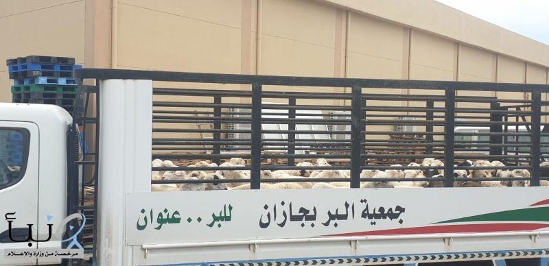 #جمعية_جازان توزع 250 اضحية يستفيد منها أكثر من 1900 يتيماً ويتيمة وأرملة