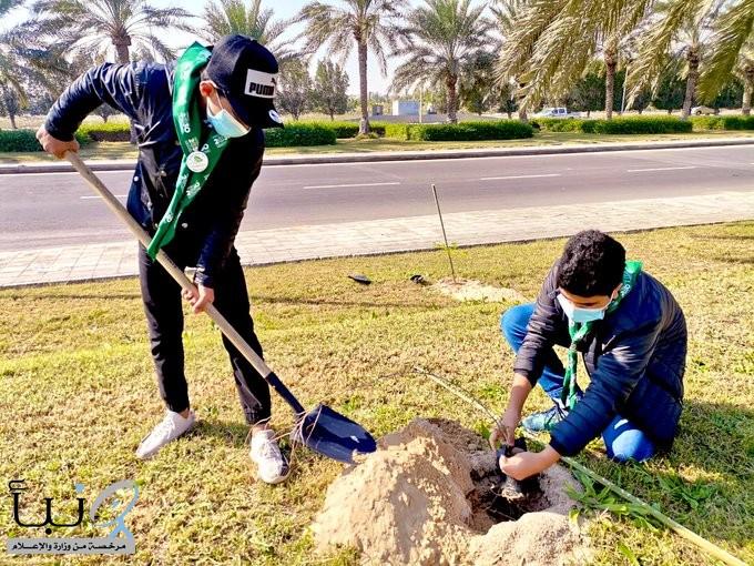 بلدية القطيف تزرع أكثر من 800 ألف زهرة في الطرق والميادين خلال موسم الشتاء