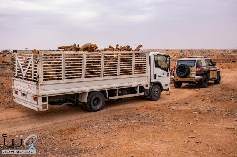 القوات الخاصة للأمن البيئي تضبط (10) مخالفين لنظام البيئة في مدينة الرياض