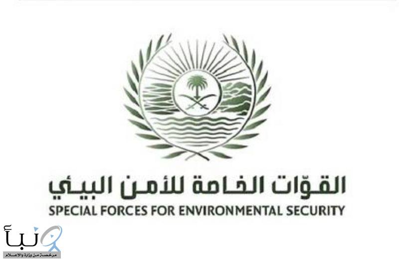 القوات الخاصة للأمن البيئي توقف (28) مخالفًا لنظام البيئة لارتكابهم مخالفات رعي