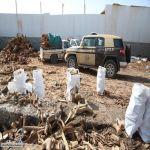 القوات الخاصة للأمن البيئي تضبط  93 طناً من الحطب المحلي